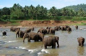 Elephant orphanage - wikipedia