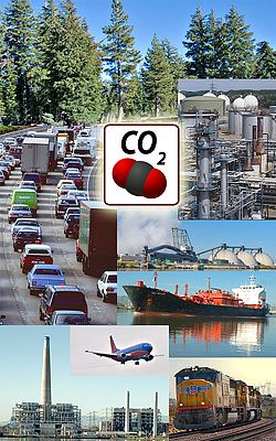 sources_and_sinks_of_co2