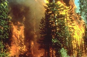 300px-Wildfire_in_California
