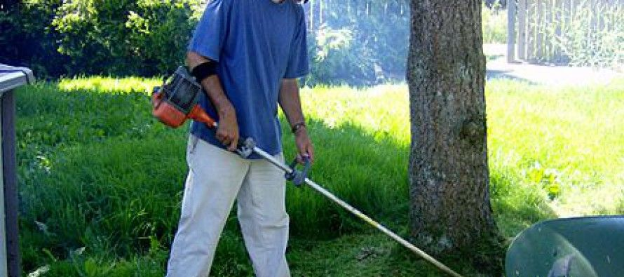 Weeds could whack your house and job