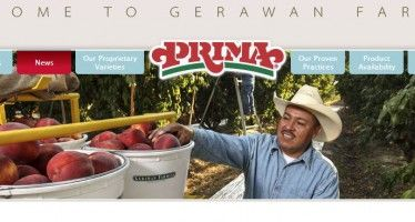 Gerawan workers protest UFW as court date looms