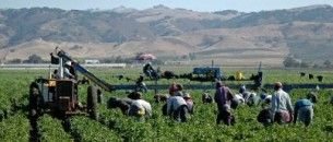 Migrant farm labor