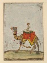 camel wikimedia