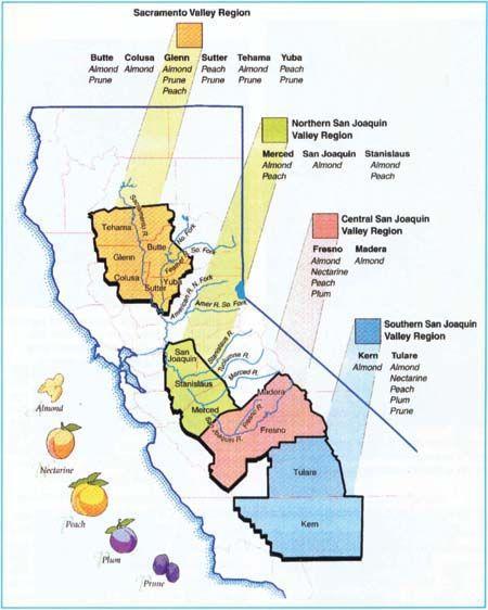 almond crops California, U.C. Davis