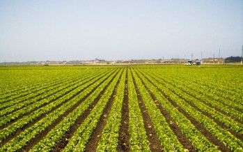 New Obamacare rule roils CA farms, farmworkers