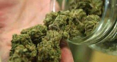 Newsom-led report pushes pot regulations