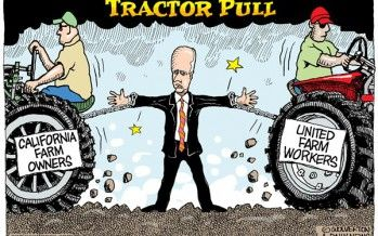 CARTOON: Brown Tractor Pull