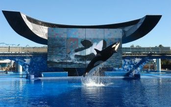 SeaWorld to drop San Diego orca shows