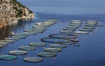 CA fish-farming: Concept praised, but project opposed