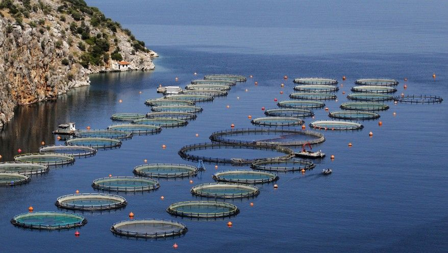 Ca fish farming concept praised but project opposed for Fish farms in california