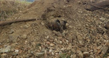 Caltrans accused of improperly dumping dead animals again