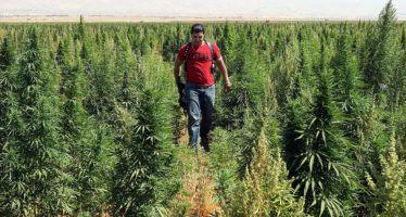 CA Democrats line up to back marijuana legalization
