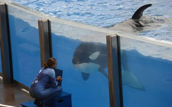 Gov. Brown signs captive orca ban