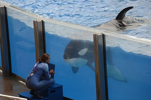 marine mammals in captivity essay help