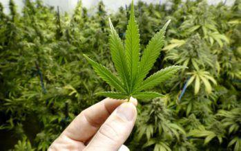 New era of marijuana dawns in California, nationwide