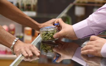 Cheap illegal cannabis sharply undercutting legal pot industry
