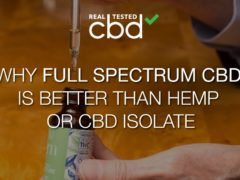 Why Is Full-Spectrum CBD Better Than Hemp CBD or CBD Isolate?