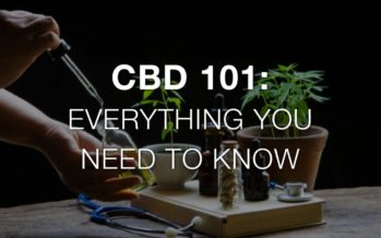 CBD 101 – Everything You Need to Know About CBD