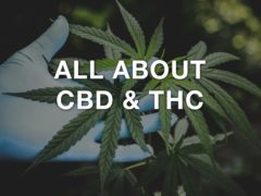 All About CBD & THC
